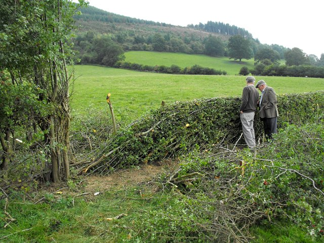 Hedging competition (2)