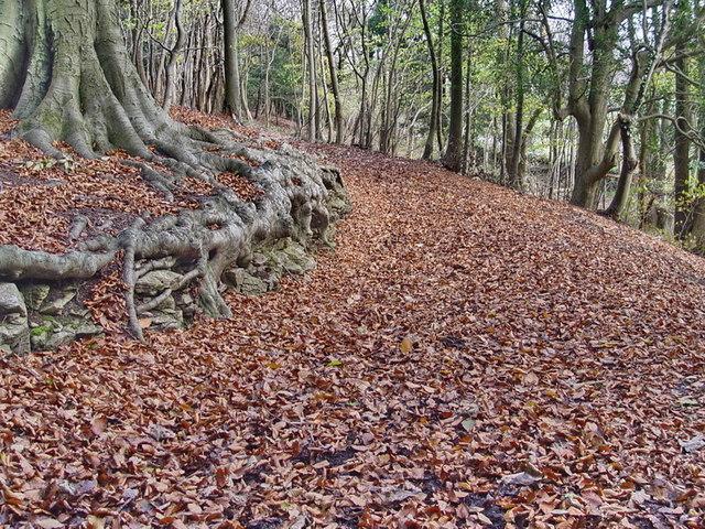 Footpath in Arnside Knott Woods