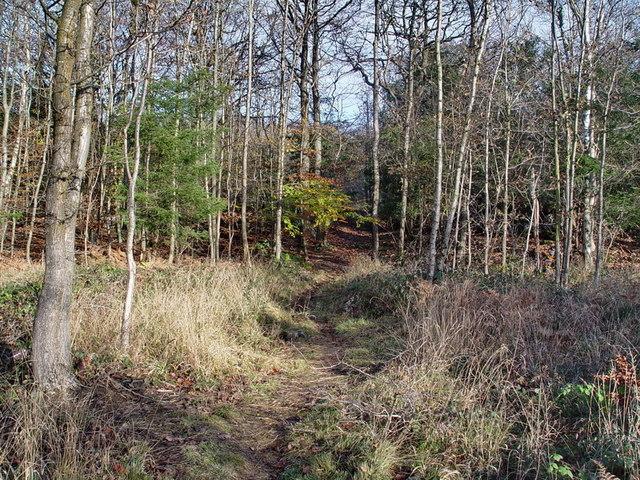 Footpath in Underlaid Wood