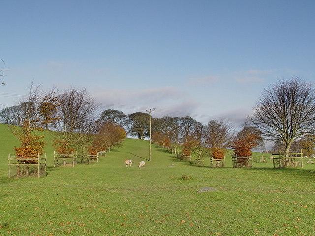 Footpath Through Milnthorpe Deer Park