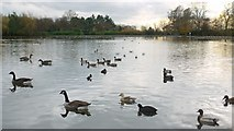 NZ2561 : Saltwell Park Lake by Andrew Curtis