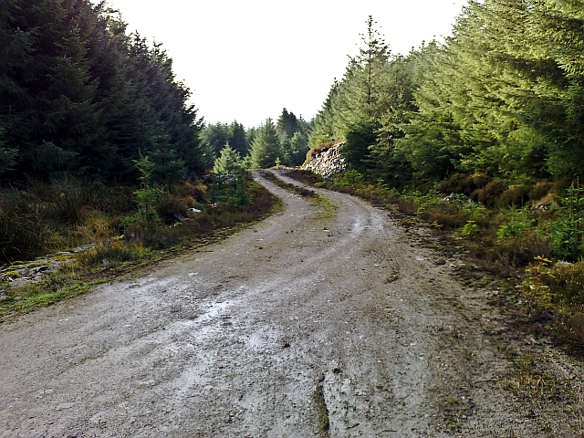 Kintyre Forestry Track (3)