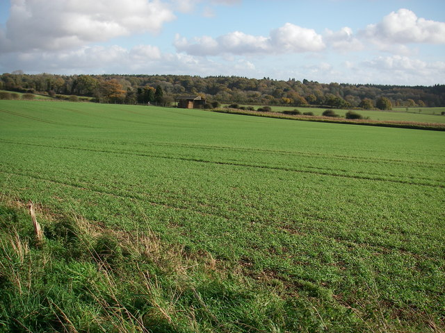 Farmland between Whitsbury & Rockbourne