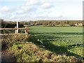 TM2997 : A field of oilseed rape beside Kirstead Lane by Evelyn Simak