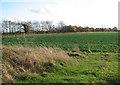 TM2897 : Oilseed rape crop in field south of Littlebeck Lane by Evelyn Simak