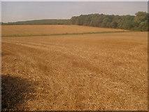 SK4762 : Arable land near Hare Plantation by Trevor Rickard