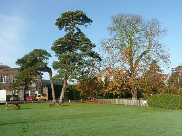 Trees at Wychnor Park