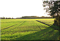 TG2001 : A crop of winter wheat in low November sunshine by Evelyn Simak