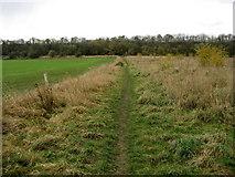 NZ2313 : Teesdale Way Short Cut by Chris Heaton