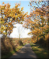 TM1997 : Autumn colours on Greenways by Evelyn Simak