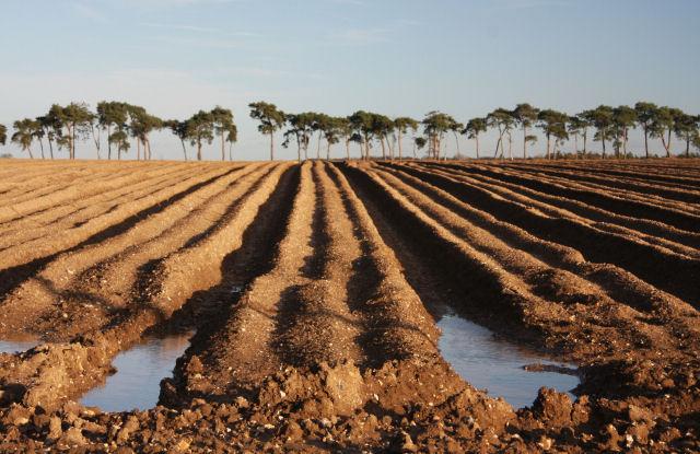 Former potato field at Hill Farm