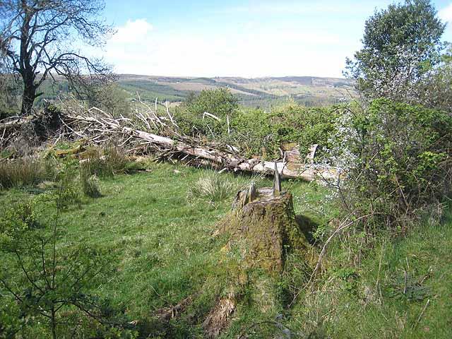 Fallen tree, Arigna valley