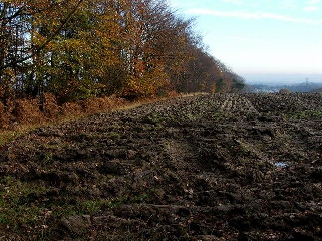 Ploughed field near Torwood Castle