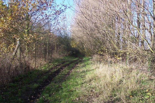 North Downs Way on a bridleway from Harbledown