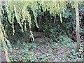 SU5979 : Steps in the Ivy by Bill Nicholls