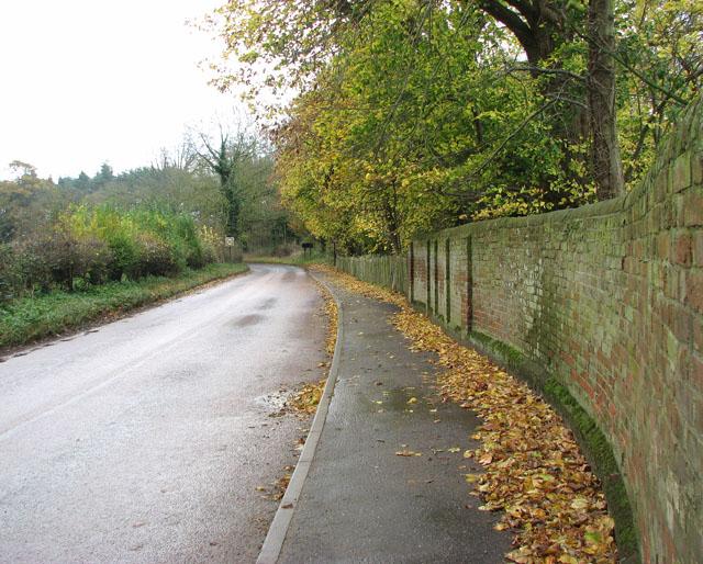 Wet leaves littering pavement