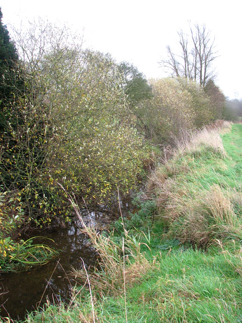 Willows growing by the Beck