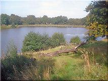 SK4564 : Miller's Pond - 2 by Trevor Rickard