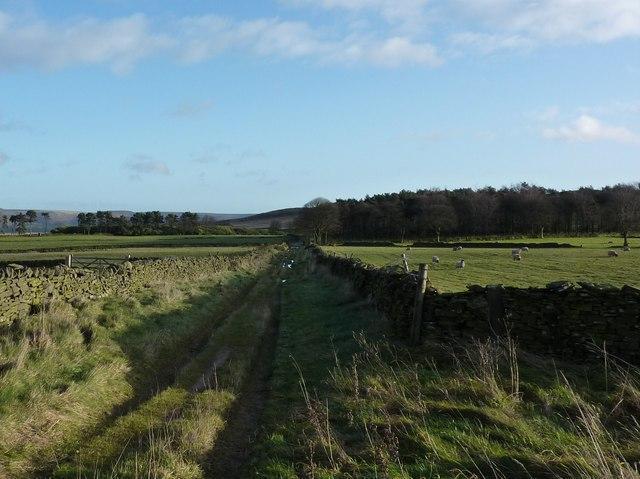 Track across Bretton Moor