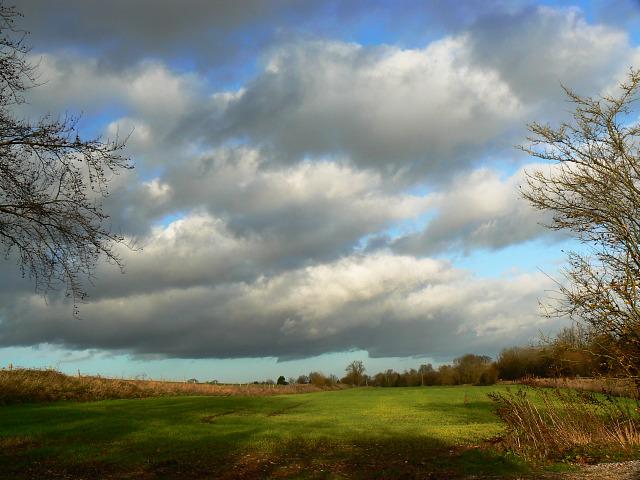 Field by the Crofton Road, near Crofton