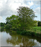 SJ6541 : Shropshire Union Canal at Coxbank, Cheshire by Roger  Kidd