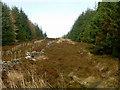 NT2842 : Roe deer on Caresman Hill, Glentress by Jim Barton