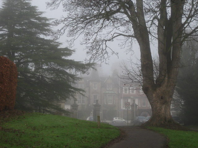 The Woodside Hotel and the big tree