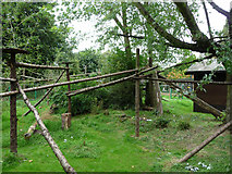 SP0683 : Red Panda enclosure at Birmingham Nature Centre by Phil Champion