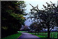 N7311 : Kildare - Irish National Stud by Suzanne Mischyshyn