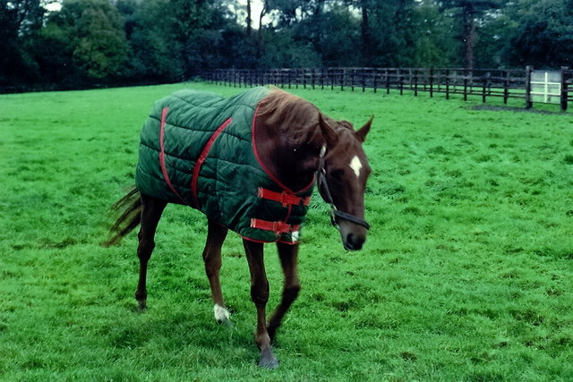 Irish National Stud: Indian... © Suzanne