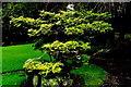 N7311 : Kildare - Japanese Gardens by Suzanne Mischyshyn