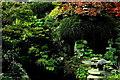N7311 : Kildare - Japanese Gardens by Joseph Mischyshyn