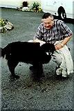N1336 : Castledaly Manor - Bess, dog said to be 21 years old by Joseph Mischyshyn