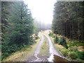 NH1200 : Forestry Road by John Ferguson
