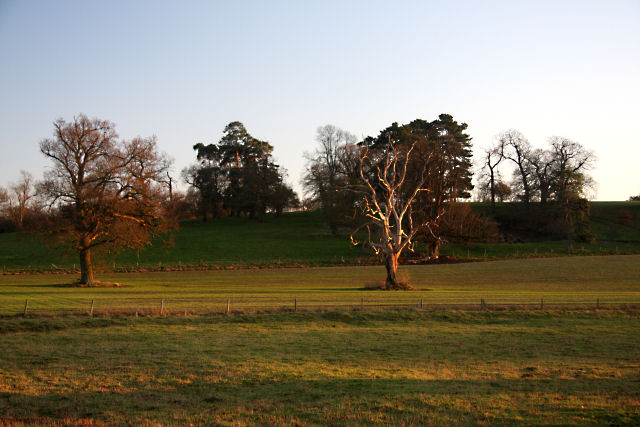 Late afternoon in Ickworth Park