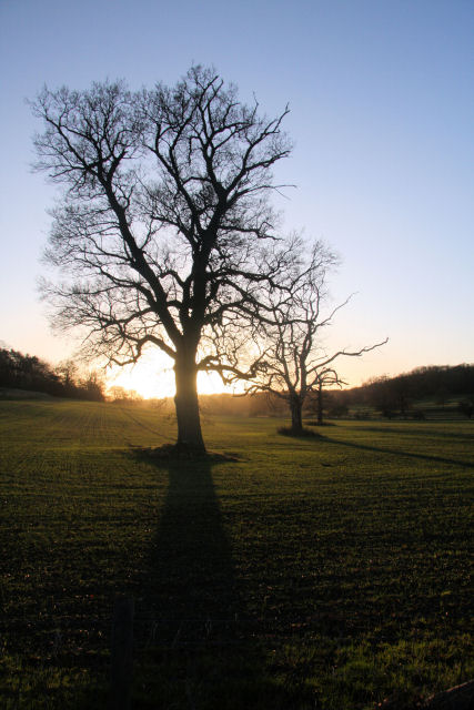 Sun going down in Ickworth Park