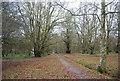 TQ5839 : Woodland, Tunbridge Wells Common by N Chadwick