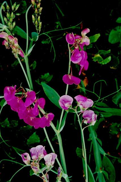 Castledaly Manor area - Delicate flowers
