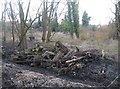 TL4556 : Felled trees & sludge by Given Up