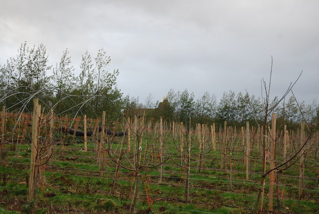 Looking across the fruit trees to the Oast house