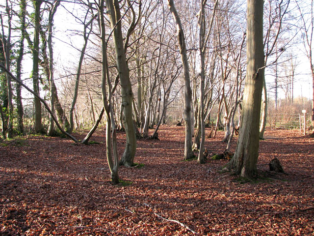 Lower Wood Nature Reserve