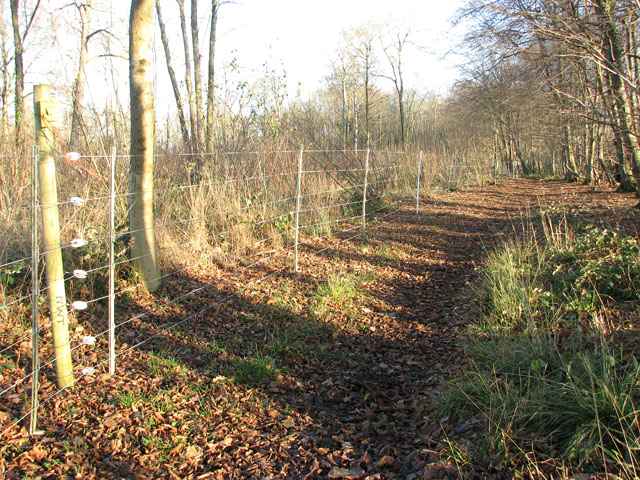 Lower Wood Nature Reserve - keeping out the deer