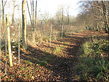 TM1497 : Lower Wood Nature Reserve - keeping out the deer by Evelyn Simak