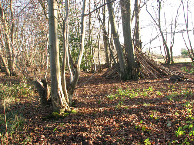 Lower Wood Nature Reserve - a shelter made of tree stems