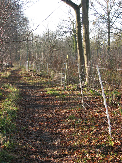 Lower Wood Nature Reserve - electric deer fence