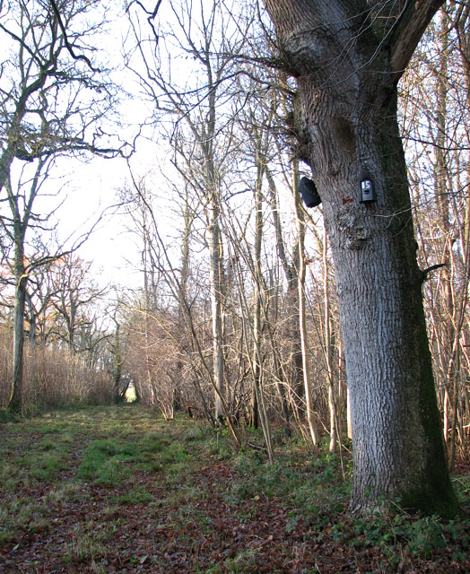 Lower Wood Nature Reserve - nest boxes on tree