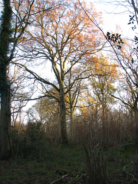Lower Wood Nature Reserve - a colourful forest canopy
