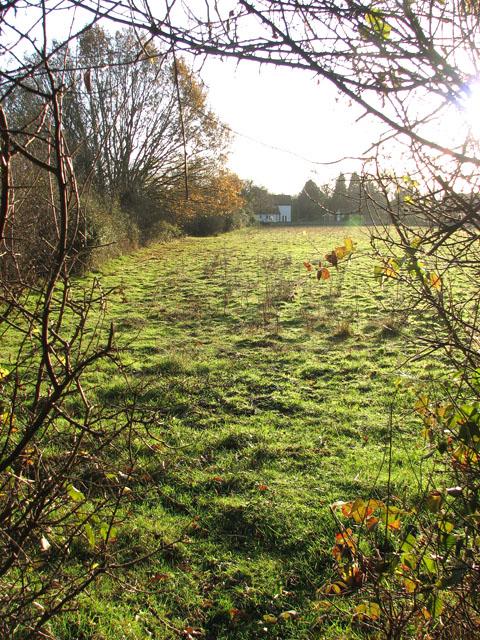 Rosemary's Meadow