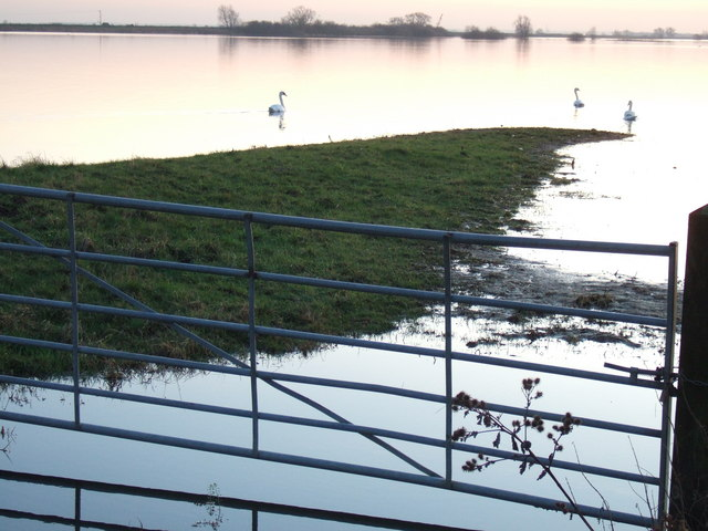 A hint of pink - The Ouse Washes at Sutton Gault