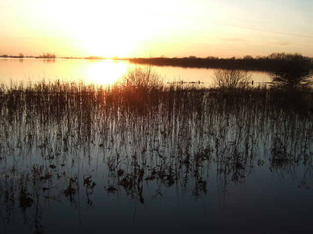 Reeds - The Ouse Washes at Sutton Gault